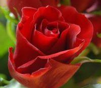 Valentinsgeschenk Blumen
